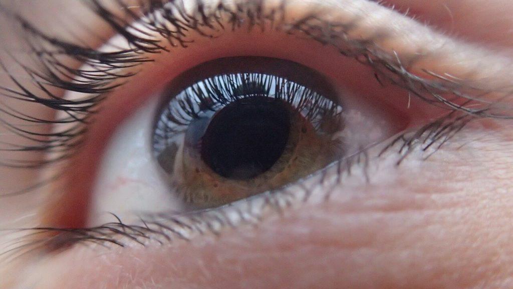 blidshell ciegos