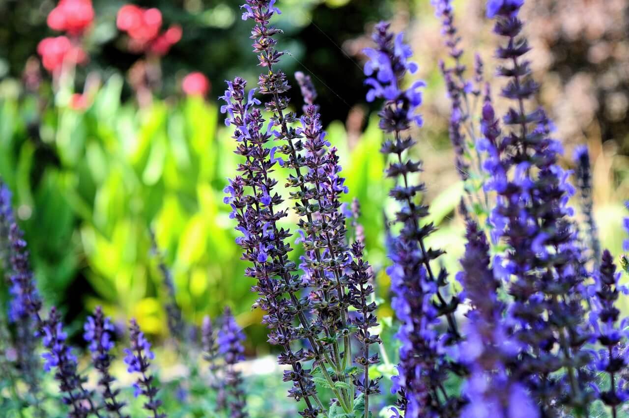identificar plantas